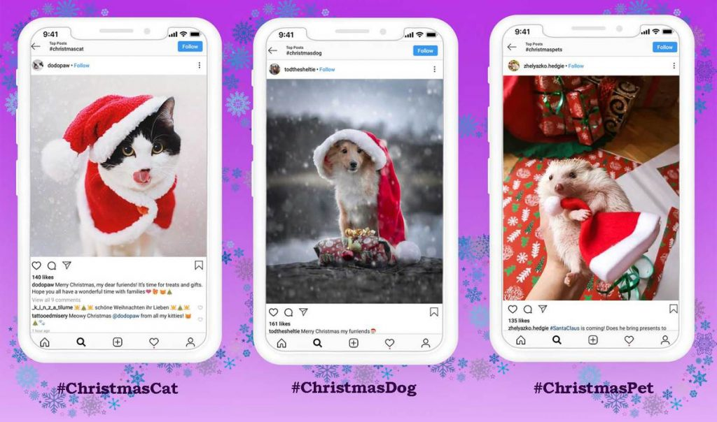 Christmas Hashtags for Pet Owners